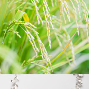 Ilmu padi